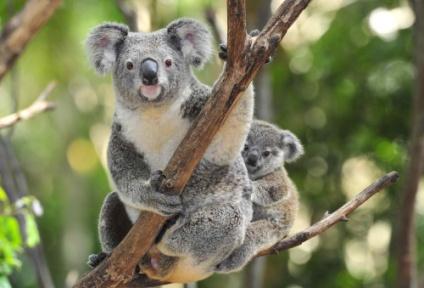 voyage de noces Australie