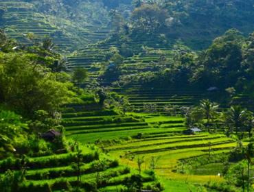 Lune de miel en Indonesie