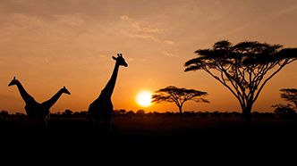 Voyage de noces au Kenya