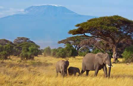 lune de miel Kenya